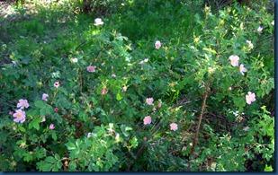 flowers summer 2010 (9)