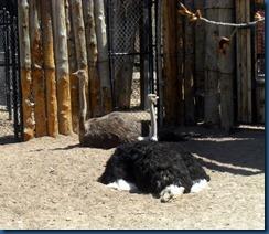 Albq Zoo (11)