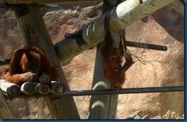 Albq Zoo (5)