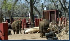 Albq Zoo (16)