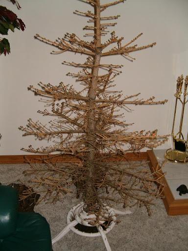 http://lh4.ggpht.com/_UG3FNOu3Szw/RkLeWeeE4YI/AAAAAAAAALo/EdLdVDDGxXc/johns_tree.jpg