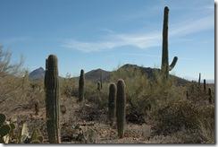 Tucson 026