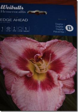 daglilje edge ahead