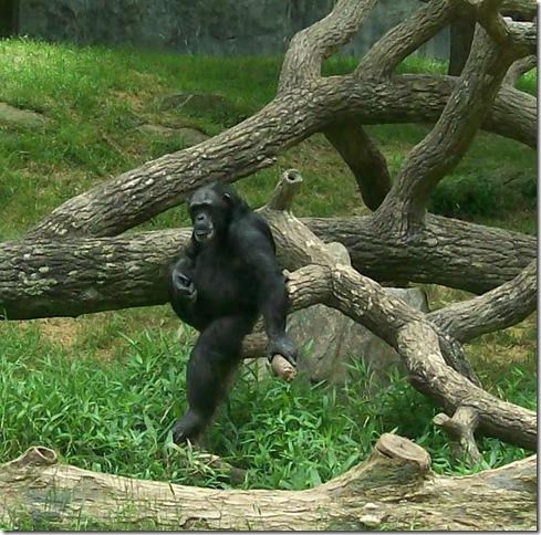 zoo day057-b crpd