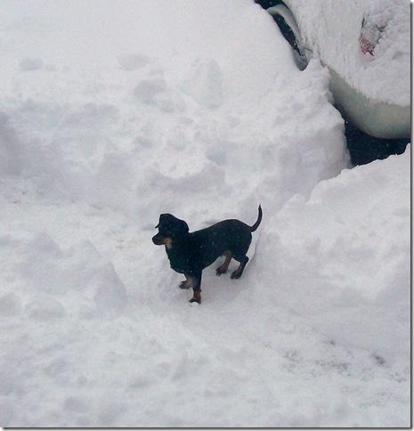 Snow 036 (crpd