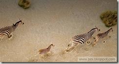 Zebras_ROW1968304150