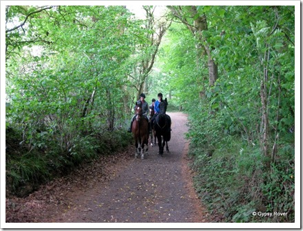 Horse riding is popular in the Forestry Commission, Westwood Forest, Marlborough.