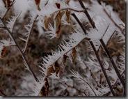 cold01062010-4