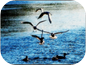 Uccelli sul Bisenzio