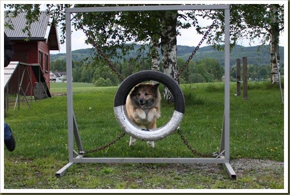 agility-trening 076