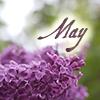 May lilacs by magic_art
