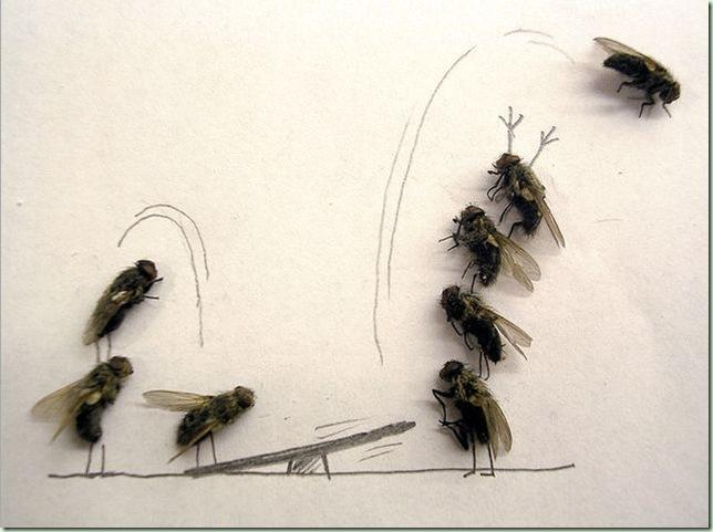 mosca3