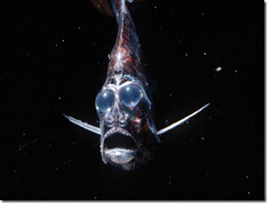 Peixe-machadinha_2