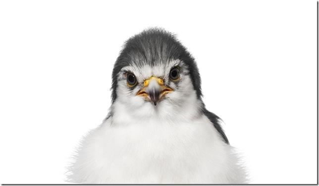 Pássaros-16
