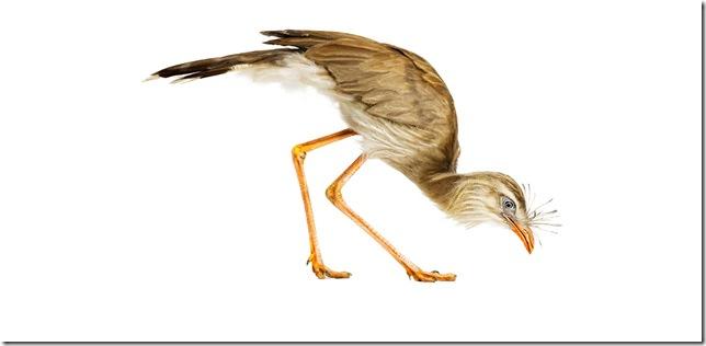 Pássaros-22