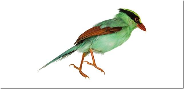 Pássaros-23