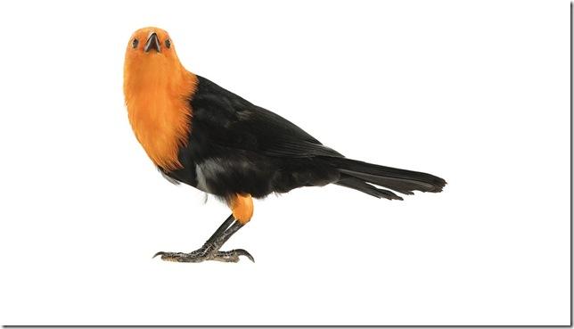 Pássaros-39