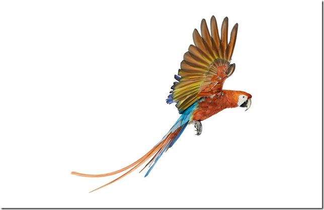 Pássaros-44