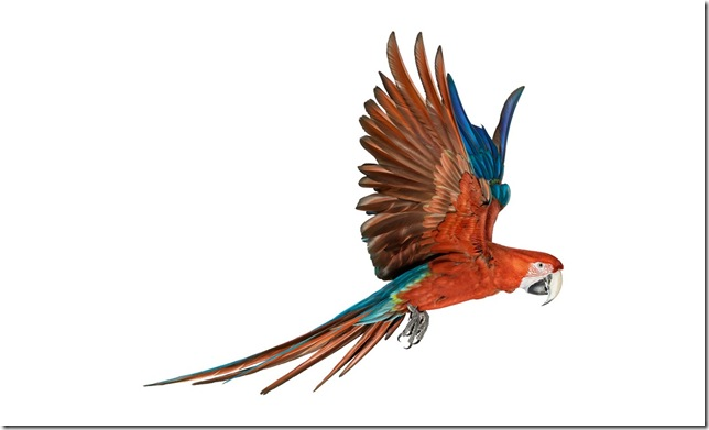 Pássaros-56
