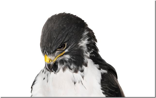 Pássaros-58