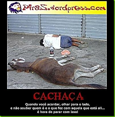 piras-cachaca1