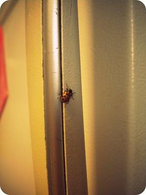 food, ladybug 009-1