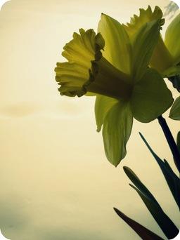 flowers 006-1