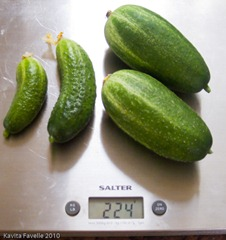 PickledGherkins1-2468