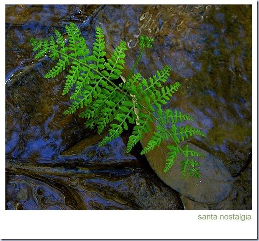 frescura_santa_nostalgia_20032011