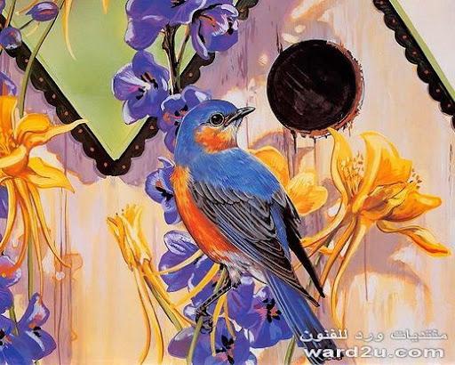 طيور منوعه فى رسومات رائعه