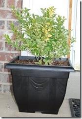 orange pot 006