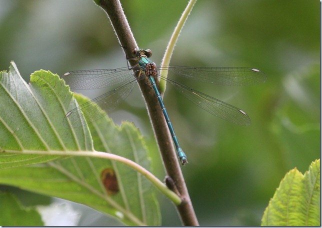 willow_emerald