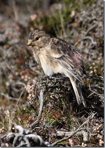 twite2