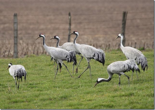 crane_group2