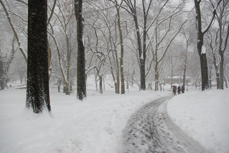 Central Park in a Snowstorm