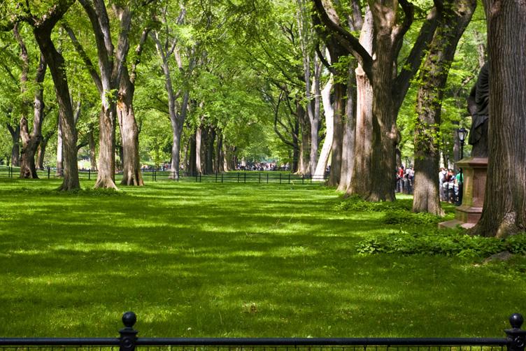 春末的central park