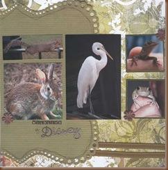 wildlife at disney