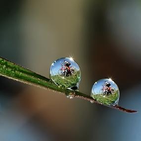 go to school by Kawan Santoso - Nature Up Close Natural Waterdrops (  )