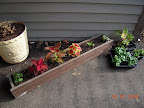 Planted out 2 impatiens + 4 coleus. Inherited the windowbox from a neighbor.