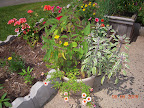 Pineapple and variegated sage, calibrachoa, some flowering succulent.