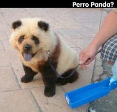 perro-panda