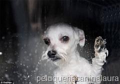 dog-o-matic2