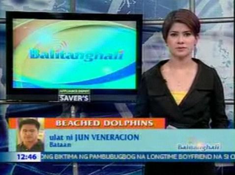Dolphins at Bataan Balitanghali