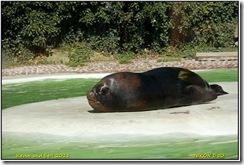 Twycross Zoo D50  01-05-2011 14-06-04