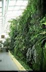 serre_du_jardin_botanique_de_toulouse_1.jpg