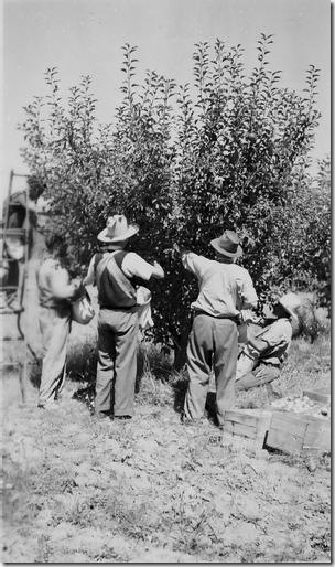 Orchard, Glenroy, 1948