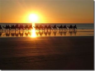 Camels near Broome