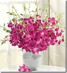 Flowers.com Orchids