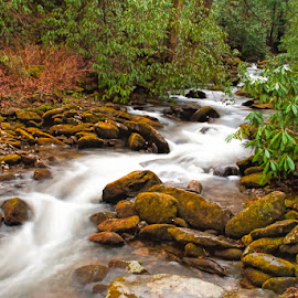 Mountain flow by Lowell Griffith - Nature Up Close Water ( water, stream, mountain, rocks, whitewater )
