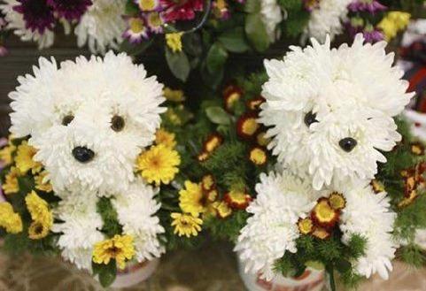 flower-dog-2